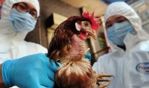حاكم نبراسكا يعلن حالة الطواريء لمواجهة تفشي انفلونزا الطيور