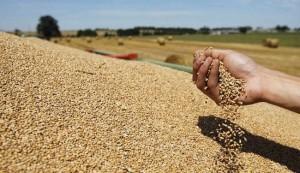 تونس تتوقع استيراد 2.3 مليون طن من الحبوب هذا الموسم