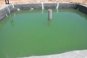 انطلاق مشروع تربية الاسماك بالمياه العذبة